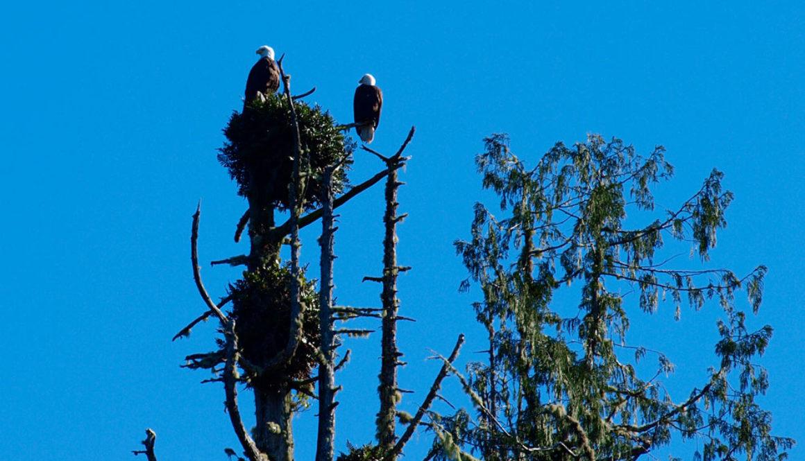 eagles-3292659_1