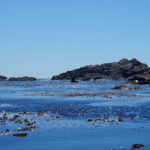 sea-lions_dsc00222_1
