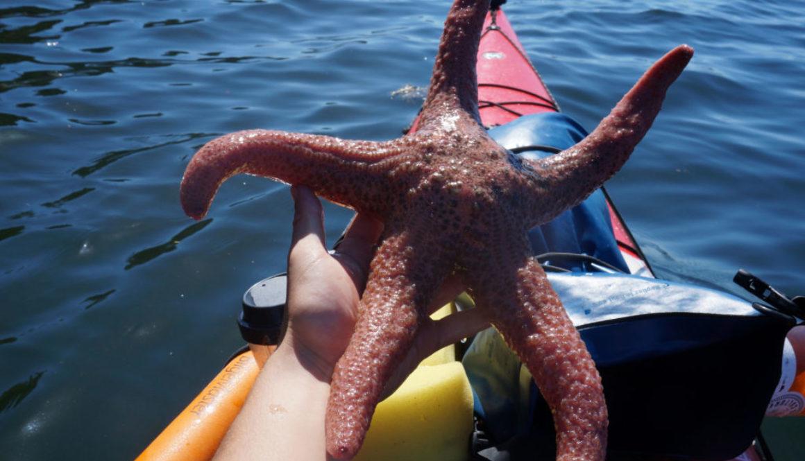 sea star kayaking